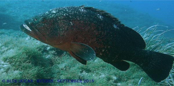 Blue Ocean Wassersport Newsletter